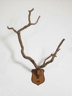 Maarten Vanden Eynde; Taxonomic Trophy (Sorbey, France) - 2008    Wood, brass, shelves - Unique    ca 142 x 98 x 45 cm