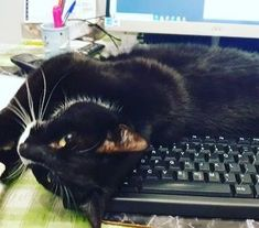 Wow, it's been a busy week. I'm calling it a day! ~ Dylan. Submitted by: Joanne Turney #catlife #tgif #fridaymood #thankgoodnessitsfriday