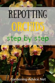 Repotting Orchids in a few easy steps. When and how to transplant orchids and all the materials needed.