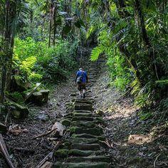 Sólo se puede acceder a la Ciudad Perdida subiendo 1.200 escalones de piedra cubiertas de musgo del río Buritaca. Foto: @ananastasiana / EL TIEMPO #DestinosDeLaEsperanza #DestinoMagdalena #DestinoCiudadPerdida #Colombia #Viajar#Turismo #Naturaleza #Medioambiente #Biodiversidad #Travel #Nature #Traveling #Trip #Traveling #Tourism #Environment #Biodiversity #Beautiful #WildLife
