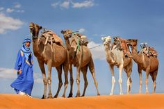 Countries Around The World, Camels, Dubai, The Outsiders, Characters, Dessert, History, Country, Travel