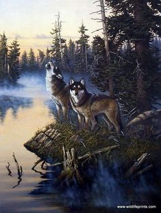 Wildlife Artist Derk Hansen Unframed Wolf Print Nature's Medley-Wolves | WildlifePrints.com