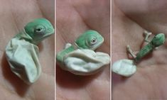 Adorable moment baby chameleon hatches and changes colour #DailyMail