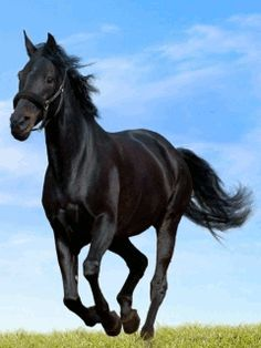 Black horse download Free Animations for mobile