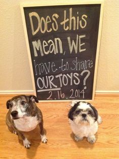 Funny and Unique Baby Announcement Pictures.when the time eventually comes, I really want Kenai to be involved in the announcement! Funny Birth Announcements, Unique Baby Announcement, Baby Announcement Pictures, Pregnancy Announcement Dog, Facebook Pregnancy Announcement, Pregnancy Announcement To Parents, Pregnancy Test, Little Mac, Baby On The Way