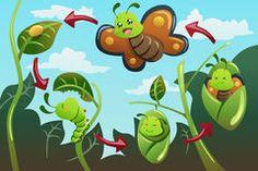 tafelkarten zur metamorphose des schmetterlings teacher butterfly kindergarten und caterpillar. Black Bedroom Furniture Sets. Home Design Ideas
