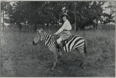 Woman Riding Tame Zebra by  Unknown Artist