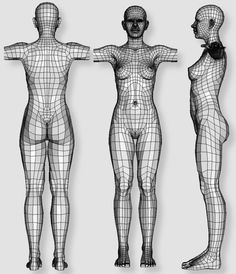Human female - work in progress (thread will contain nudity) Anatomy Models, Anatomy For Artists, Anatomy Art, Anatomy Drawing, Human Anatomy, Anatomy Study, 3d Model Character, Female Character Design, Character Modeling