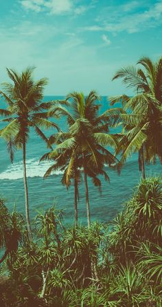 Great aesthetic wallpaper for your home screen! Great aesthetic wallpaper for yo. Great aesthetic wallpaper for your home screen! Great aesthetic wallpaper for your home screen! Tree Wallpaper Iphone, Ocean Wallpaper, Summer Wallpaper, Nature Wallpaper, Travel Wallpaper, Cute Home Screen Wallpaper, Homescreen Wallpaper, Wallpaper Pictures, Wallpaper Wallpapers