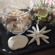 Random diy things on pinterest graduation caps - How to decorate with seashells ...