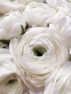 Emily Quinton Botanicals | Makelight Ranunculus, Organic Recipes, Organic Gardening, White Flowers, Planting Flowers, Florals, Blush, Inspire, Illustrations
