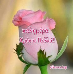 Name Day, Rose, Flowers, Plants, Pink, Saint Name Day, Plant, Roses, Royal Icing Flowers