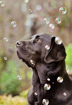 Dog and bubbles ~photo by Jessica Keating from Newcastle Upon Tyne, UK.