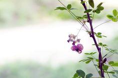 여름의 상징인 덩쿨식물 입니다. ^^   단월드에서의 편안한 명상