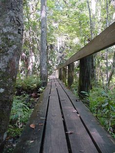 The Hickory Trail boardwalk stretches through the forests of Highlands Hammock State Park in Sebring, FL.