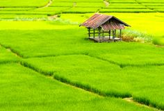 Rice paddies, Mae Hon Son loop, Thailand. Image by Jack Southan / Lonely Planet