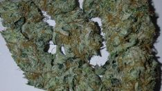 Buy OG Kush inside our Dispensary Growing Marijuana Indoor, Marijuana Plants, Cannabis Growing, Cannabis Plant, Cannabis Seeds Online, Cannabis Seeds For Sale, Cannabis Vape, Medical Marijuana, Plants