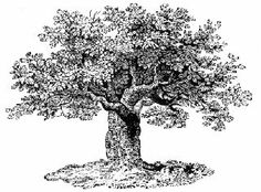 Line-drawing of tree