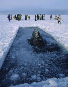 78 Best Barrow Alaska images