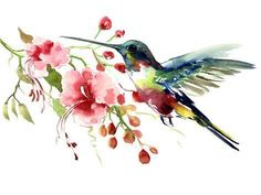 Hummingbird Artwork Hummingbird and flowers, original one of a kind watercolor art, flying hummingbird painting floral tropical colors by ORIGINALONLY on Etsy Hummingbird Drawing, Watercolor Hummingbird, Hummingbird Tattoo, Watercolor Bird, Watercolor Paintings, Tattoo Watercolor, Watercolor Portraits, Watercolor Landscape, Abstract Paintings