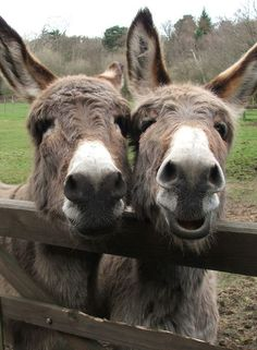 They look like twin donkeys!