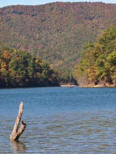 Northeast Tennessee is rounded out by Boone Lake, a reservoir formed by the Boone Dam and the Holston River. Vacation Destinations, Vacation Spots, Destin Fishing, Best Swimsuits, Adventure Travel, Tennessee, Beautiful Places, Places To Visit, Around The Worlds