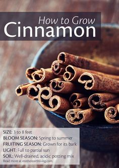Container Gardening: cinnamon. I had no idea you could grow it?!