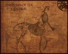 Anatomy of The Centaur by ~Shadowglove