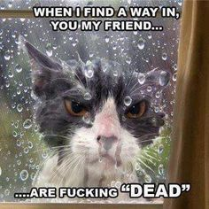 funny cat pics. Looks altered but still funny!