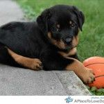 knox-and-a-ball - so sweet!!