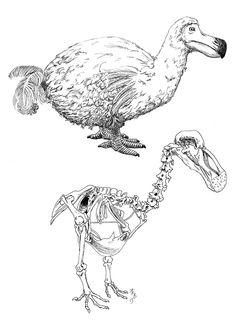 Dodo bird by lunavalse.deviantart.com on @deviantART