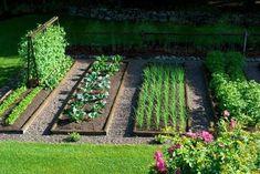 Affordable backyard vegetable garden designs ideas 61