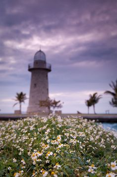 daisies at boca chita by RadiHoliday, via Flickr