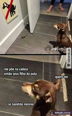 ai MDS q revolta kskks Cute Cats And Dogs, Animals And Pets, Cute Animals, Top Memes, Dankest Memes, Funny Memes, Why God Why, Little Memes, Memes Status