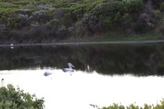 L1M2AP2 TV Mode, 1.4 Took this picture of pelicans swimming down a river. Took picture with a tripod looking down onto the river as I was up on a hill.