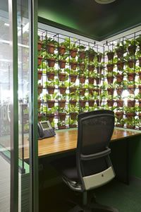 Sure to increase your working oxygen levels.  Schiavello Vertical Garden by Ambius Indoor Plants.