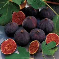 #FIG TREE  - Greek: Sykea - An important #orchard tree in ancient Greece. Figs were eaten #fresh and dried for out of season consumption.  Sacred to: Demeter & Dionysos  - Metamorphosis Sykeus. One of the #Titans who fled from Zeus and was transformed by his mother Gaia into a fig-tree. (Source: Athenaeus)