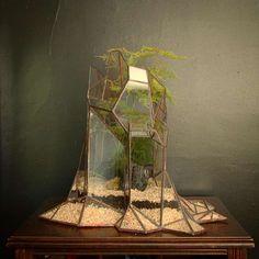 Ces mini-terrariums aux parois géométriques en verres sont créés par Alexander…