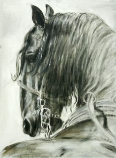 I ride horses  and jump horses but the one thing I love to do is draw horses