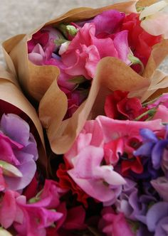 Florissimo - Flowers for weddings and events in Shropshire. SWEET PEA. From Florissimo Flower Directory at https://uk.pinterest.com/ByFlorissimo/flower-directory/   Pinks, purples, red and white