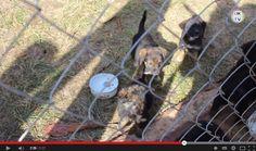 Tierheim Sirius Video  #Shelter #Sirius #Tierheim #Ukraine http://www.pawu.org/news/tierheim-sirius-video/