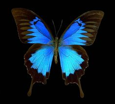 Booktopia - One Hundred Butterflies : The Butterfly Photographs Of ...