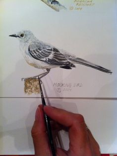 A Mockingbird - Bird Art by #blueshineart #mockingbird #watercolour #bird