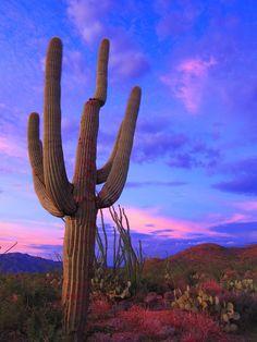 Stunning Saguaro Sunset by C V, via 500px; Saguaro National Park, Arizona