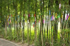 Tanabata: The Night When Love Prevails - Savvy Tokyo Japanese Festival, Tanabata, Night Love, Tokyo, Culture, Brazil, Tokyo Japan
