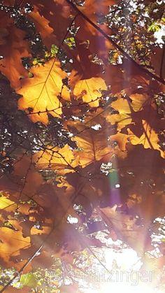 Zonnestralen in de herfst by Sasja