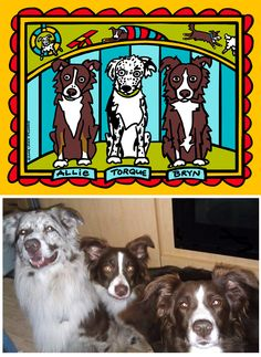 Allie, Toque & Bryn: Border Collie agility champs! Super Fun Pet Story Portrait from Anne Leuck Feldhaus Studio