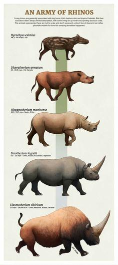 Rhinoceros Evolution Source by leorafanbin Prehistoric Wildlife, Prehistoric World, Prehistoric Creatures, Jurassic Park World, Extinct Animals, Rhinoceros, Mundo Animal, Fauna, Science And Nature
