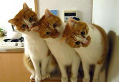 Very interesting post: TOP 42 Cats and Kittens Pictures. Also dompiсt.сom lot of interesting things on Funny Cat.