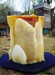 Honeycomb! (1) bee keeping   Tumblr